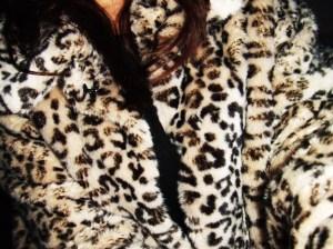 leopard 016